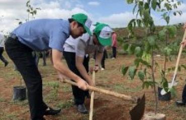 Đắk Lắk phát động phong trào thi đua đặc biệt 'Phấn đấu hoàn thành chỉ tiêu, nhiệm vụ của Chương trình mục tiêu phát triển lâm nghiệp bền vững giai đoạn 2016 – 2020'