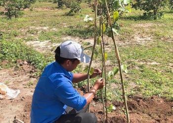 Đắk Lắk: trồng 1.770 ha rừng trong năm 2020
