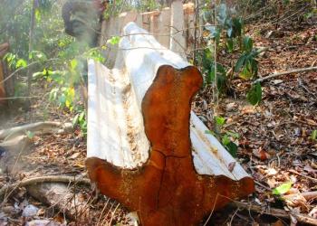 Đắk Lắk: Mật phục truy quét lâm tặc tại điểm nóng phá rừng