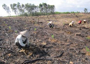 Bất cập trong xử lý việc chậm nộp tiền trồng rừng thay thế