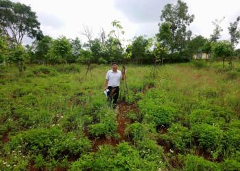 Thị xã Buôn Hồ và huyện Krông Năng hoàn thành trồng cây phân tán năm 2021
